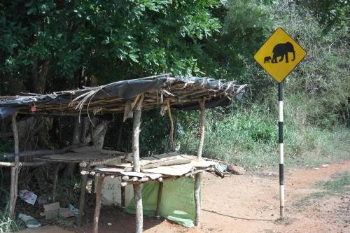 Sri Lanka - le passage des éléphants.JPG