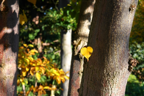 Jardin Albert-Kahn 8.JPG