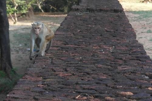 Polonnaruwa 12.JPG