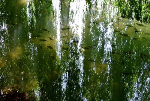 frédéric tison, photographie, bourges, marais de l'yèvre et de la voiselle