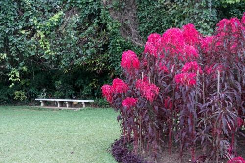 frédéric tison,photographie,sri lanka,jardin botanique de peradeniya