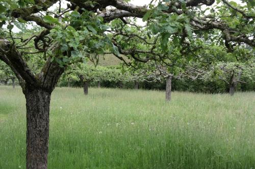 frédéric tison,photographie,jardin potager du château de saint-jean de beauregard