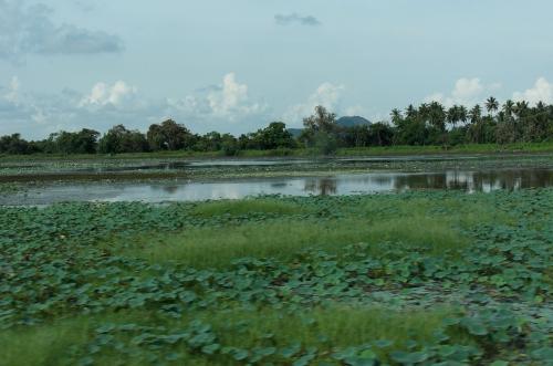 Sri Lanka - paysage 4.JPG