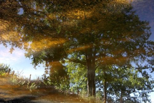 frédéric tison,photographie,étang de la ganne