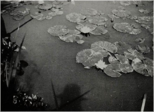 Monet - ombre 1920.jpg