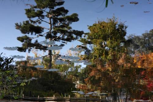 Jardin Albert-Kahn 9.JPG