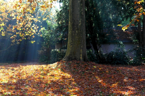 Jardin Albert-Kahn 5.JPG
