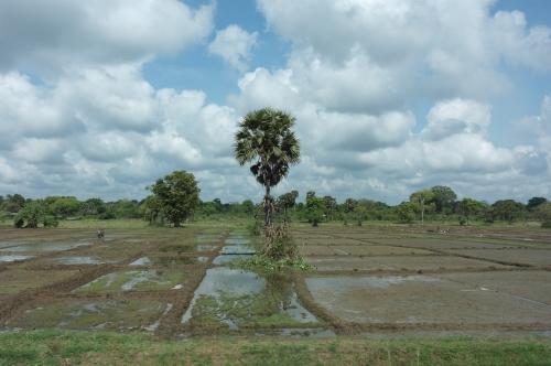 Sri Lanka - paysage 3.JPG