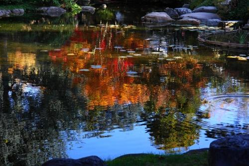 Jardin Albert-Kahn 7.JPG
